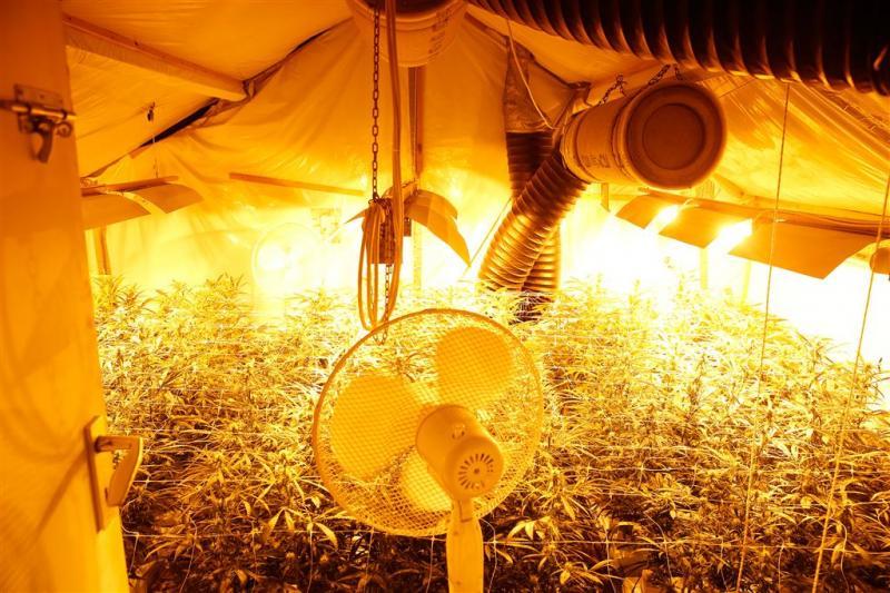 'Hennepkwekers stelen 200 miljoen aan stroom'