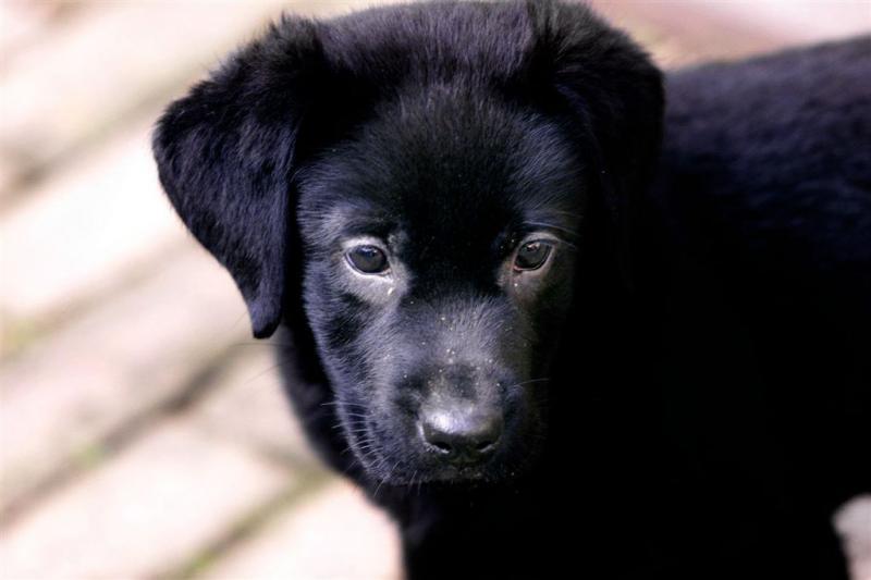 Justin Bieber haalt nieuwe pup in huis