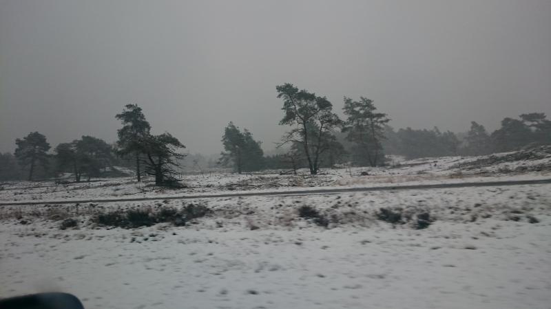 De wondere witte Veluwe 2 (Foto: AnitaHanjaab)