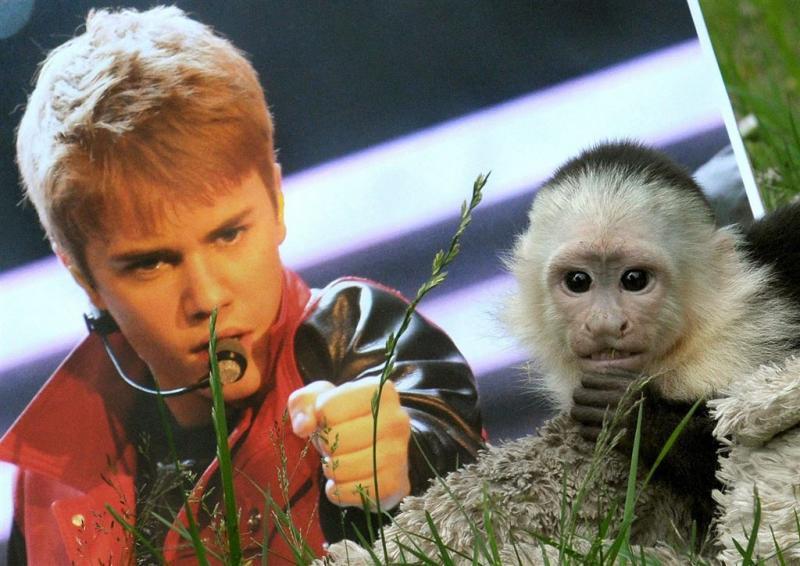 Justin Bieber wil nieuw aapje