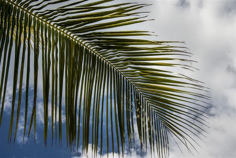 Sekstape-lek schokt Temptation Islands Louise