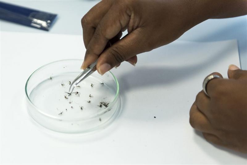 Zikavirus gevaarlijker dan gedacht