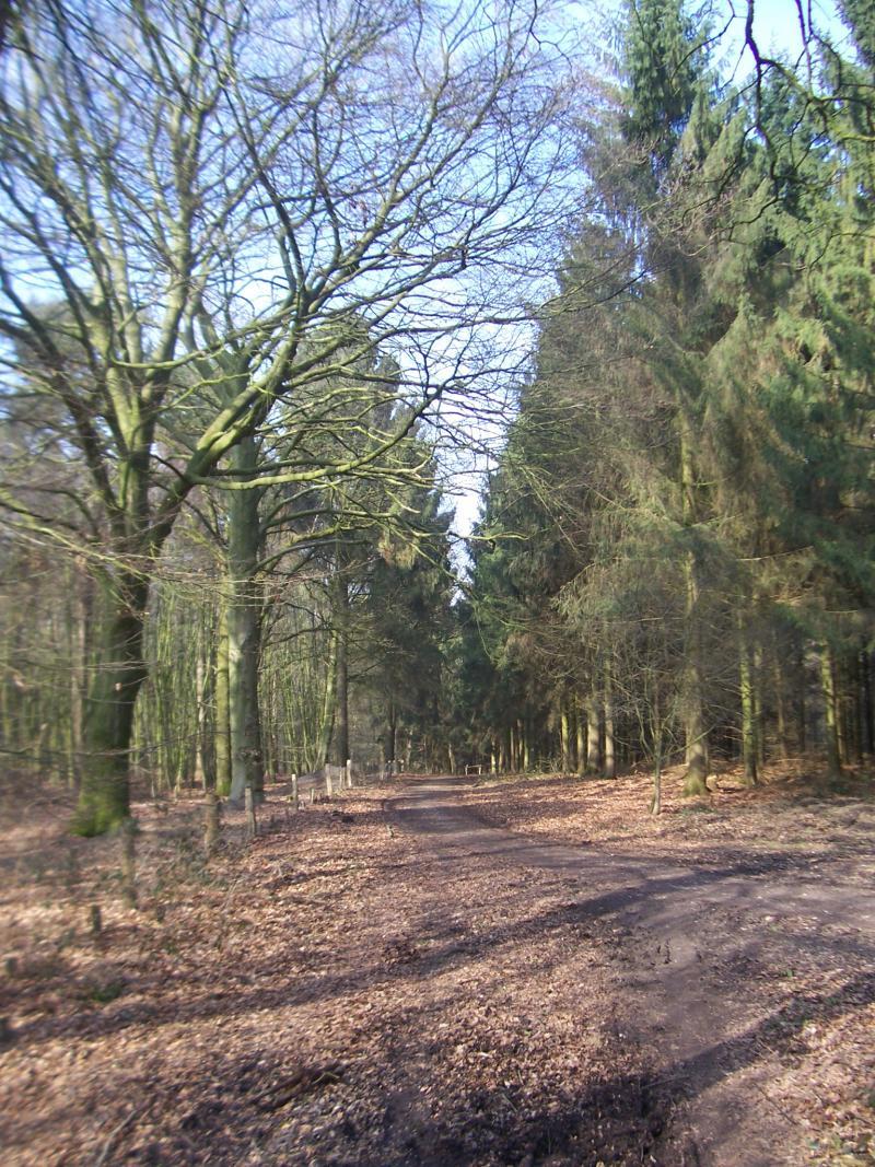 Pad in het Reichswald (Foto: qltel)