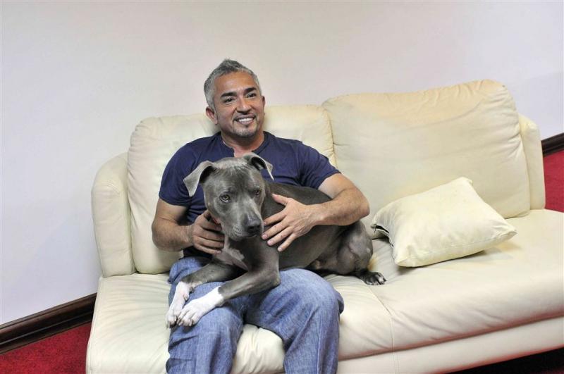 Cesar Millan verdacht van dierenmishandeling