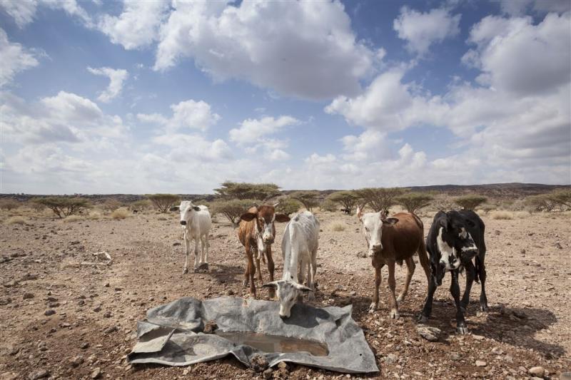 Ruim 120 miljoen tegen hongersnood Ethiopië