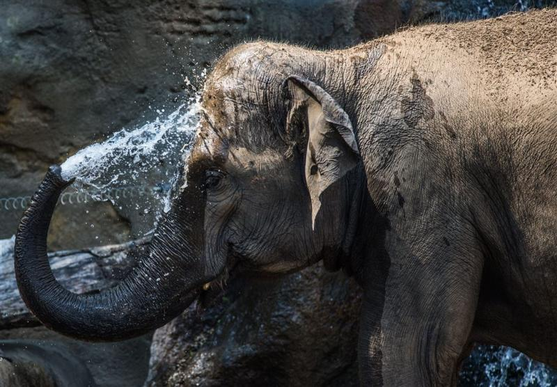 Geen slapende olifanten wakker maken