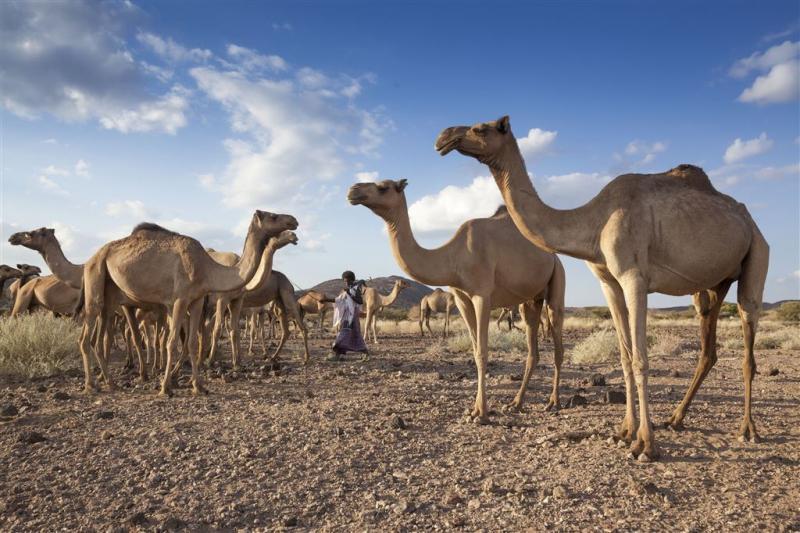 Extra gift Nederland voor droog Ethiopië