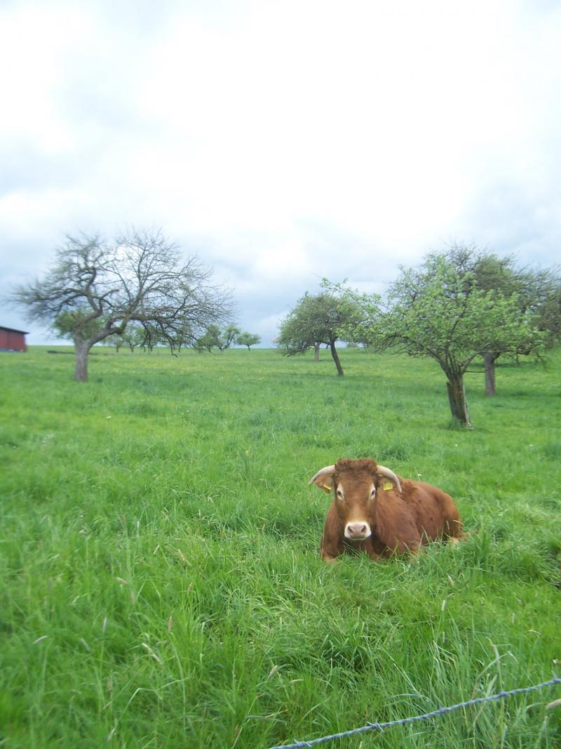 Wandeling in de omgeving van Morbach (Duitsland) (Foto: qltel)