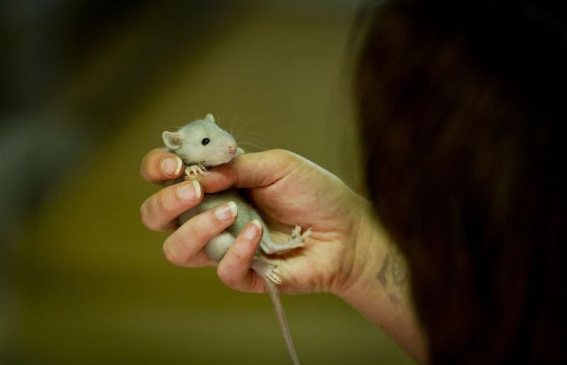 AH Valkenswaard dicht door rattenplaag