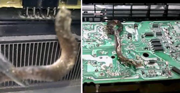 PS4 vermoordt slang