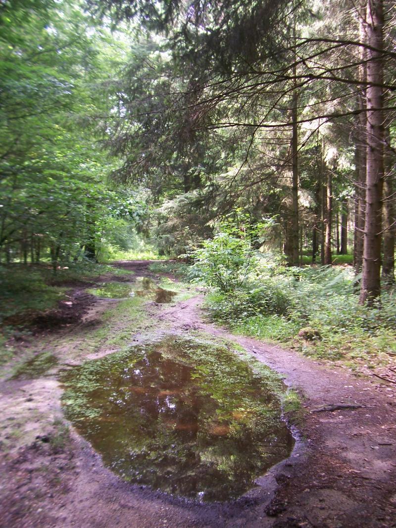 Laantje in het Reichswald bij Kleve in Duitsland (Foto: qltel)