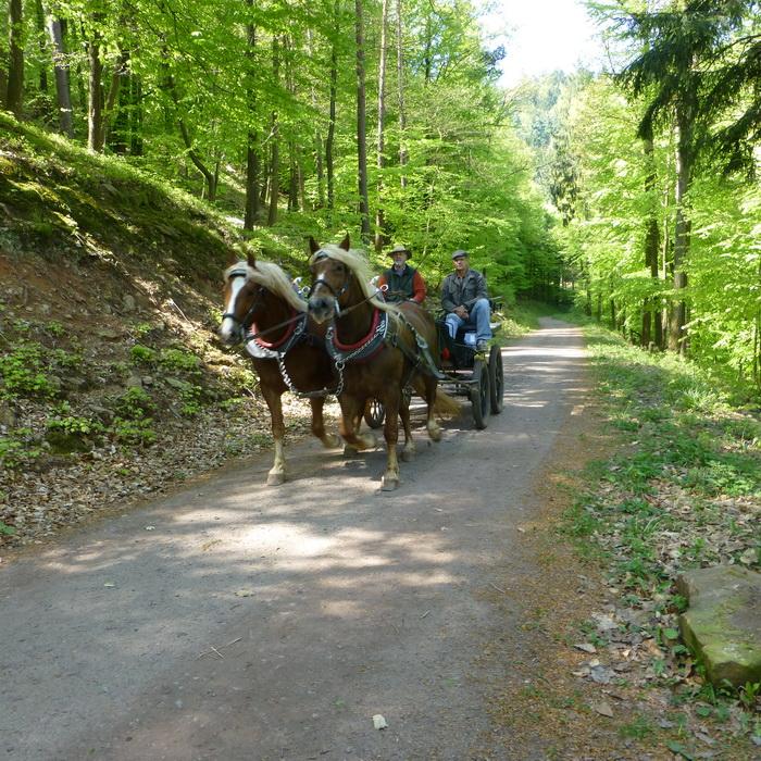 Paardjes in het Pfälzerwald (Foto: Rewimo)