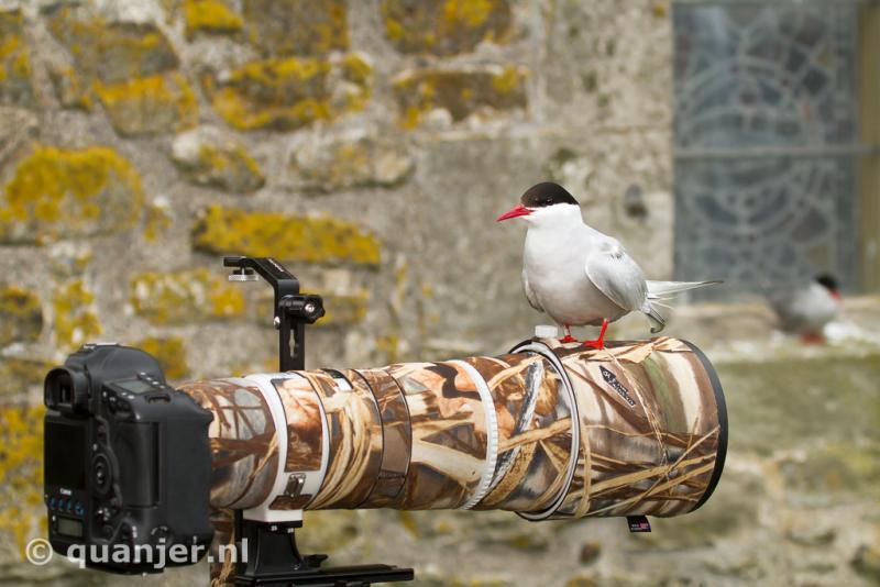 Details op de Farne Eilanden (Engeland)  (Foto: Duco)