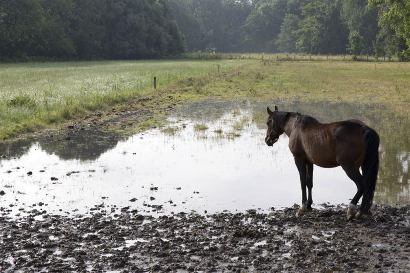 'Waterschade boeren loopt op tot miljard'