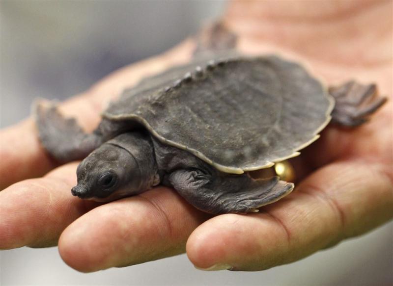 Man rijdt met ruim 5500 schildpadden in busje