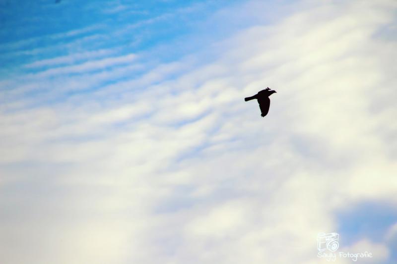 Roofvogel gezien door Luuntje. (Foto: Luuntje)