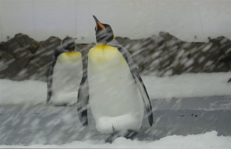 Rosszee wordt grootste beschermde zeepark