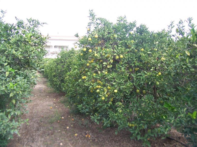 Fruitbomen in Portugal (Foto: qltel)