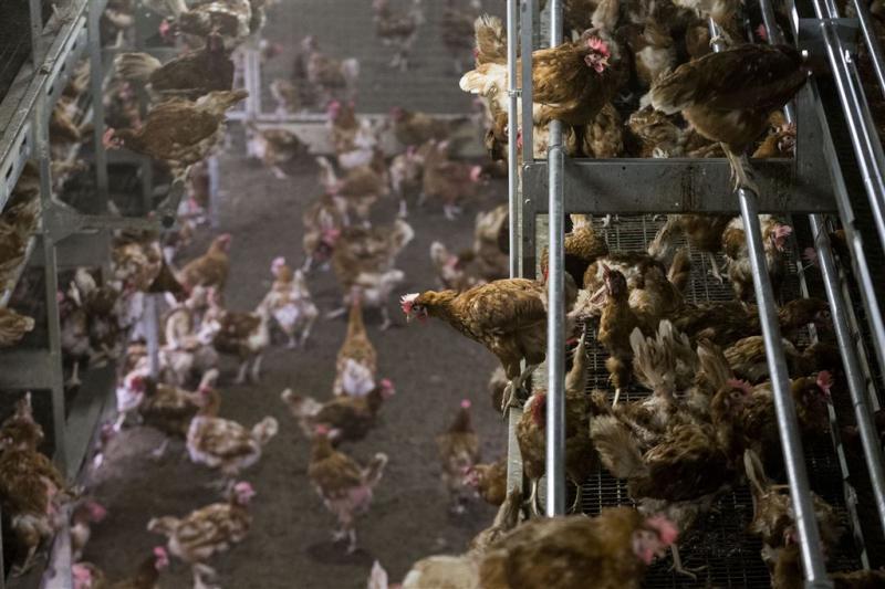 Dode vogels Monnickendam besmet met H5N8