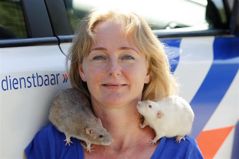 Rat wordt mogelijk speurneus