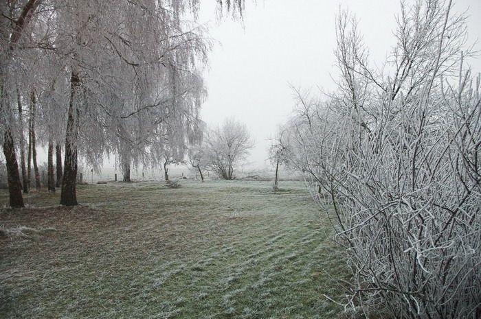 Na een koude winternacht waren de bomen mooi berijpt bij qltel (Foto: qltel)
