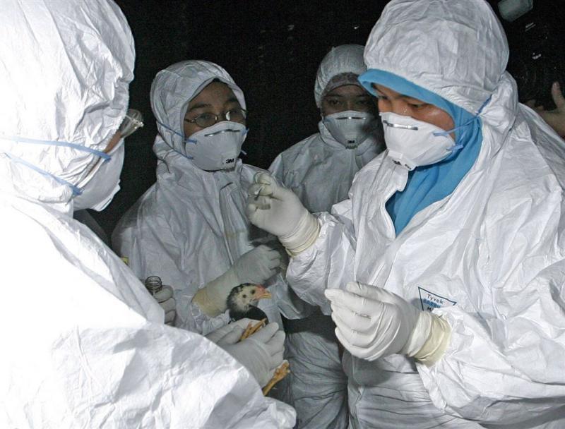 Japan start grote ruiming kippen en eenden