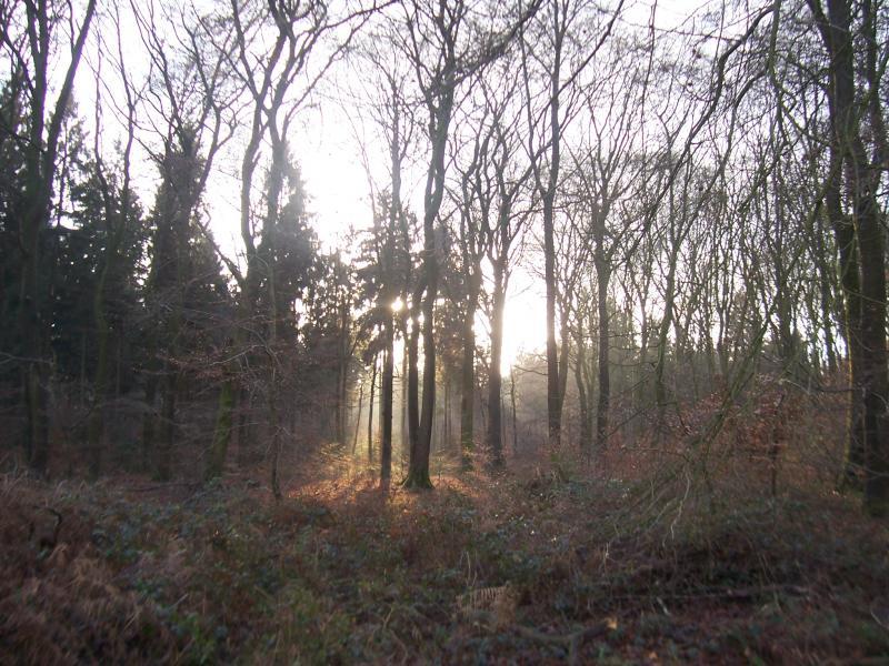 Lekker zonnetje (Foto: qltel)