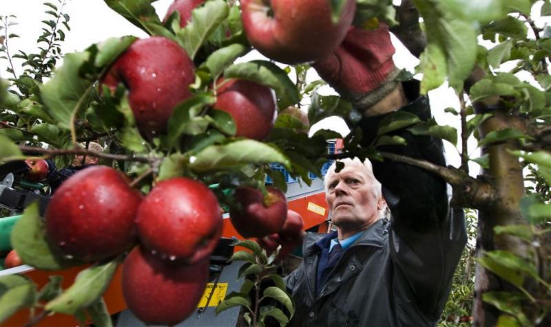 Wisselend succes voor groente- en fruitsector