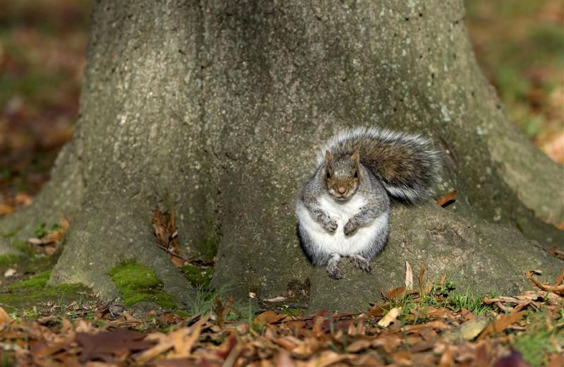 Eekhoorns vallen kinderen aan in Brits park