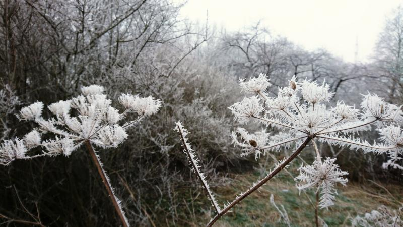 Winterfoto's uit heel Nederland!  (Foto: perrin)