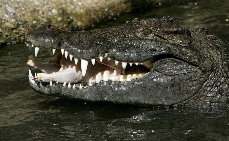 Australische man gedood door krokodil