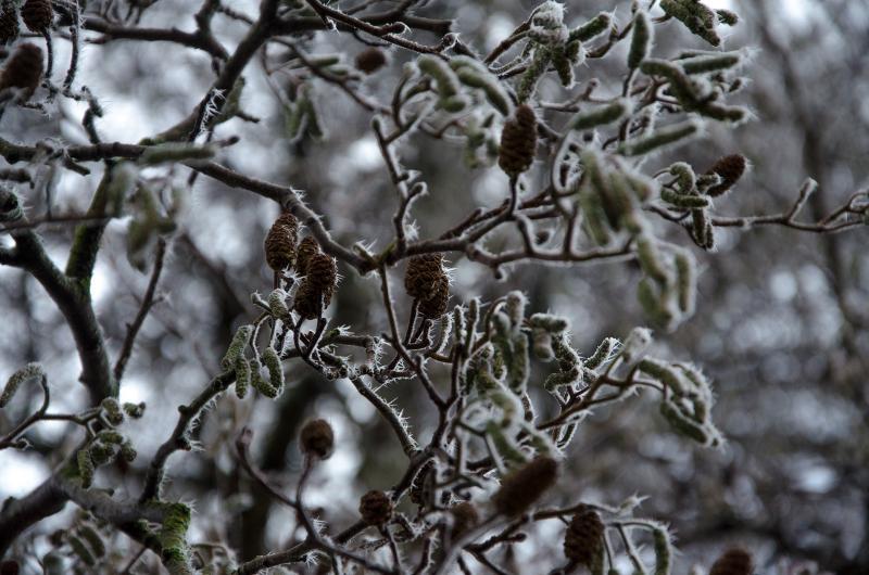 Winter in Den Helder (Foto: DJ Koelkast)
