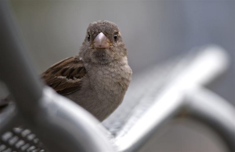 Wie doet mee met de tuinvogeltelling?