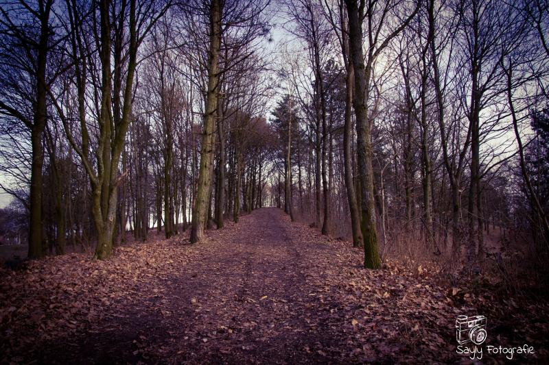 Rustig bospad in de buurt van Heerlen (Foto: Luuntje)