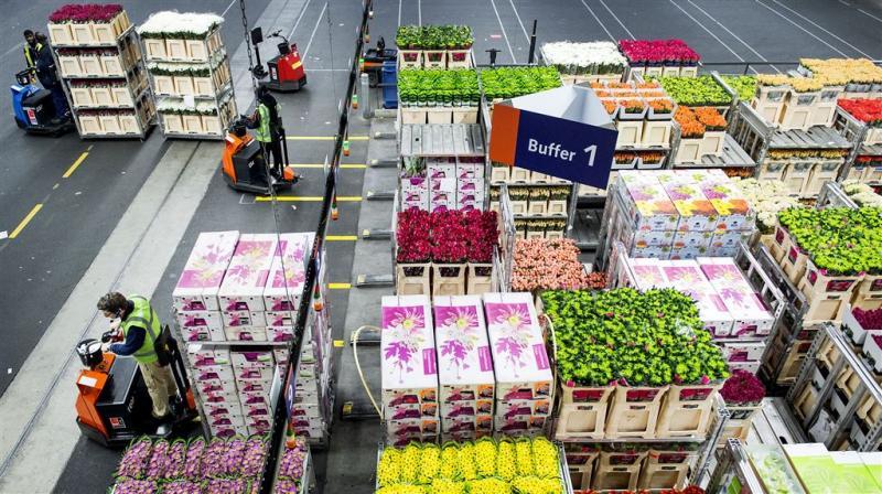 Valentijn zorgt voor topomzet bloemensector
