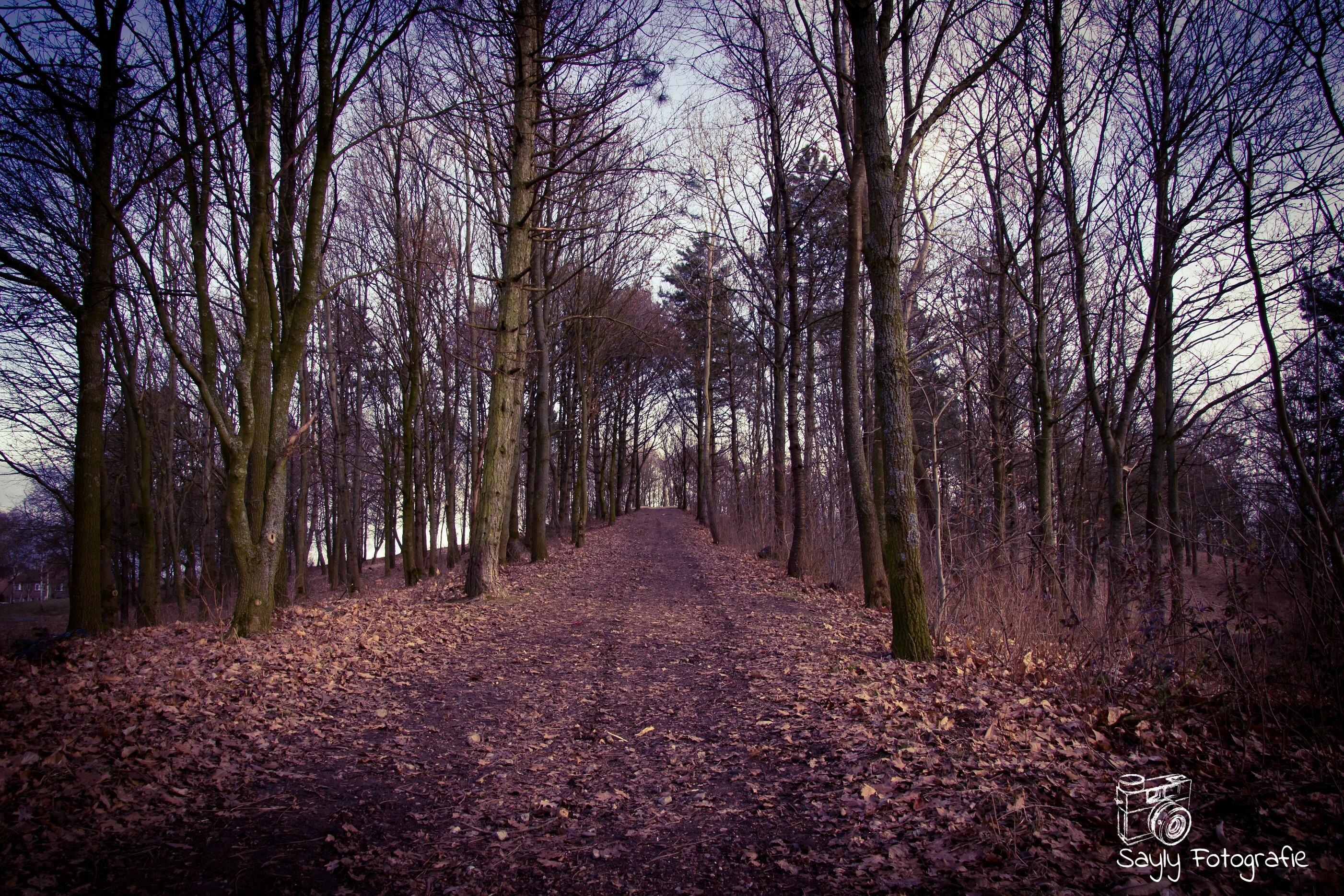 Rustig bospad in de buurt van Heerlen (Archieffoto: Luuntje)