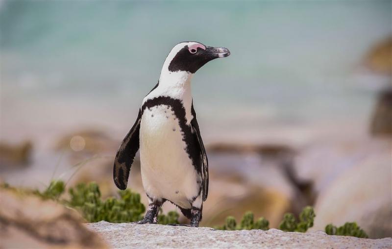 'Pinguïn gestolen door georganiseerde bende'