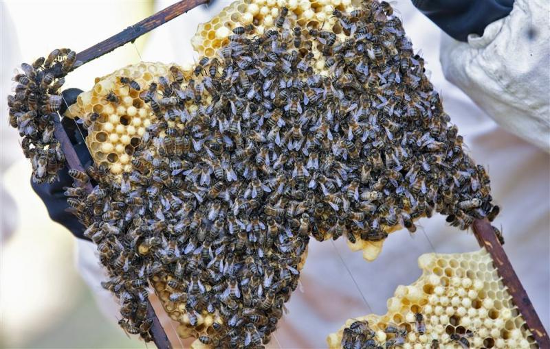 Honing trekt criminelen in Nieuw-Zeeland