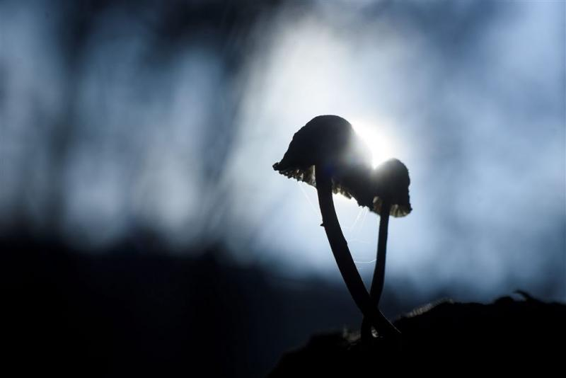 Oudste intacte fossiele paddenstoelen gevonden