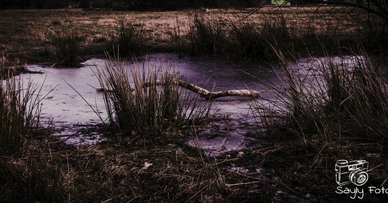 IJsvlakte in Heerlen (Foto: Luuntje)