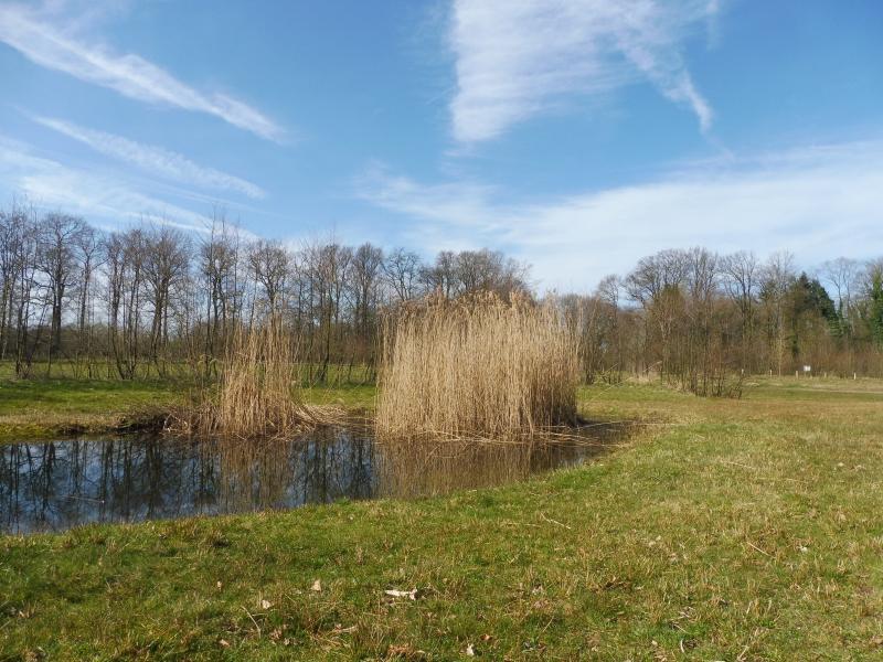 Lentefoto in de buurt van Winterswijk (Foto: qltel)