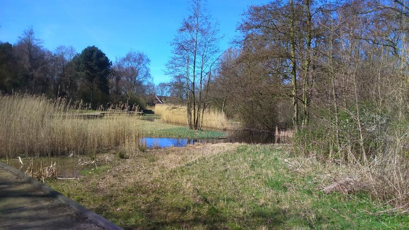 Zonnige lentedag in de Rekerhout (Alkmaar) (Foto: DJMO)