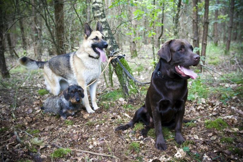 Amateurspeurderhonden stuiten op lichaam