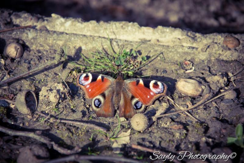Luuntje was in zeswegen bij Heerlen en fotografeerde daar deze vlinder (Foto: Luuntje)