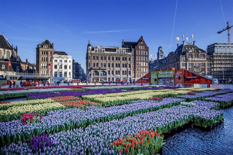 Meer dan half miljoen tulpen sieren Amsterdam