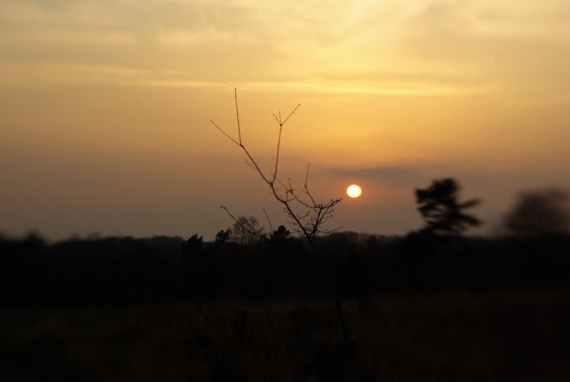 Zonsondergang op de Veluwe (Foto: Disbatch)