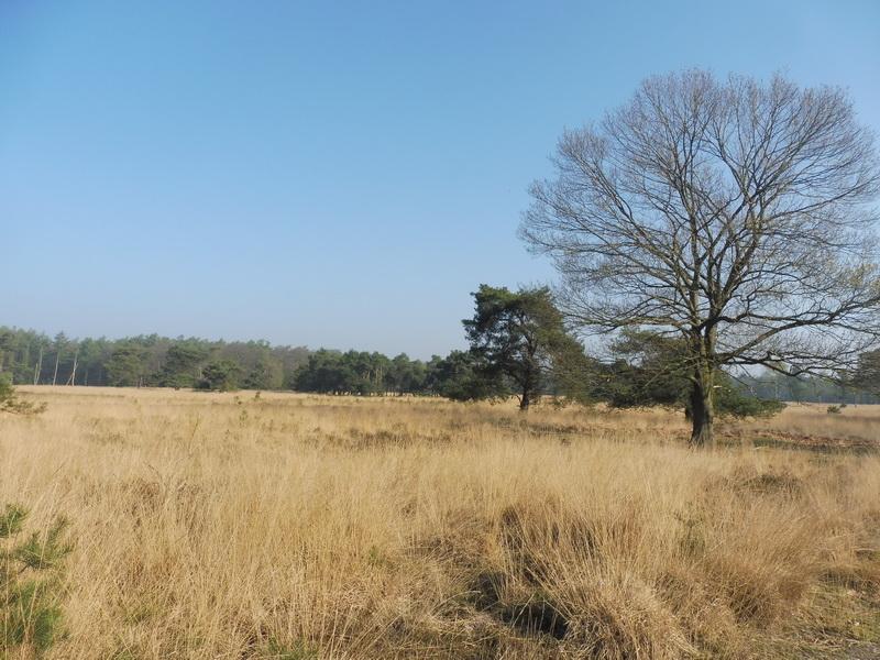 Blik over grasvlakte in de buurt van Milheeze (Foto: qltel)