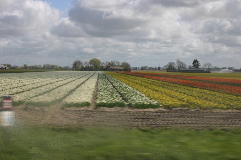 Uitzicht over de bloembollenvelden bij Anna Paulowna (Foto: DJMO)