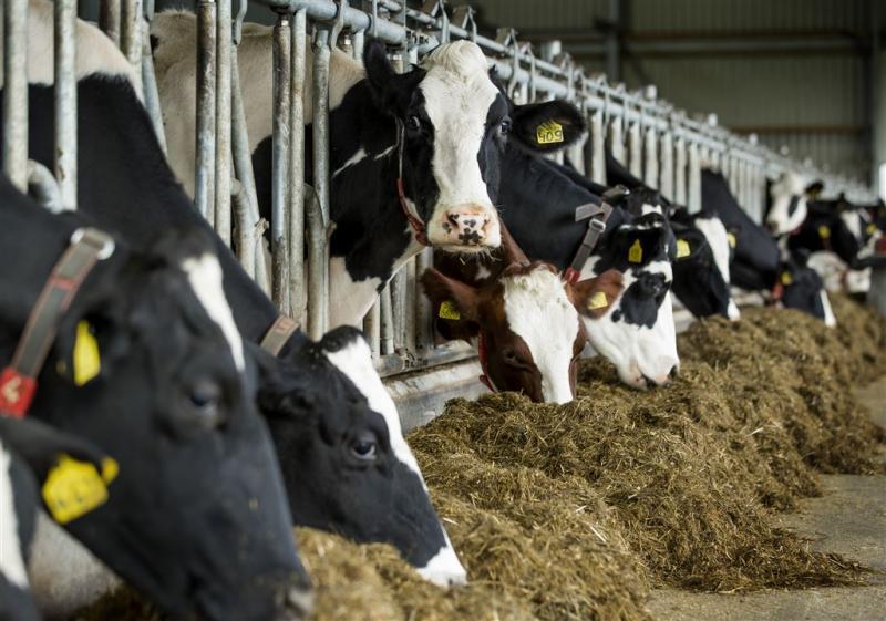 Rechter stelt boeren vrij van afstaan koeien