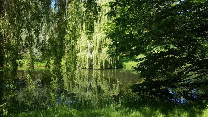 Iteejer maakte deze sprookjesachtige foto in het bos (Foto: Iteejer)